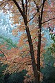 Fall Colors in the Late Afternoon - panoramio.jpg