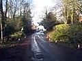 Fallen Tree on Woodchurch Road - geograph.org.uk - 1596513.jpg