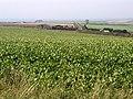 Farmland View - geograph.org.uk - 63860.jpg
