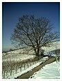 February Minus 10 Grad Celsius Walnut California Germany - Magic Rhine Valley Photography 2013 - panoramio.jpg