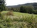 Field Near Low Farm - geograph.org.uk - 537134.jpg