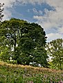 Field and tree - geograph.org.uk - 954582.jpg