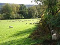 Field of Sheep - geograph.org.uk - 1018062.jpg