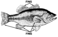 Fin (PSF).png