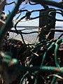Fischernetze.jpg