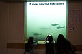 Fish Viewing Window, Bonneville Dam.jpg