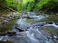 Flickr - Nicholas T - Fall Brook Natural Area (Revisited) (3).jpg