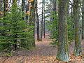 Flickr - Nicholas T - Open Woods.jpg