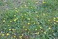 Flora della Sardegna 102 (1).JPG