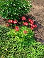 Flower-center135006.jpg