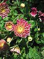Flowers (105).JPG