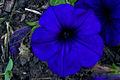 Flowers 076.jpg