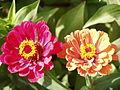 Flowers ARM.JPG