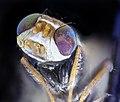 Fly black white winged, maglev 2020-09-16-14.58.19 ZS PMax UDR (50353649638).jpg