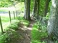 Footpath above Stanhope Burn - geograph.org.uk - 818347.jpg