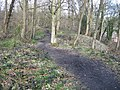 Footpath in Beacon Wood - geograph.org.uk - 1774968.jpg