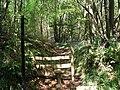 Footpath into Hawks Wood - geograph.org.uk - 173911.jpg