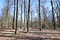 Forêt Départementale de Beauplan à Saint-Rémy-lès-Chevreuse le 14 mars 2018 - 05.jpg