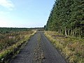 Forest Track - geograph.org.uk - 576753.jpg