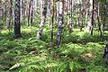 Forest bpk cm04.jpg