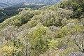 Forest in Mt.Nabeashi 09.jpg