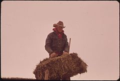Frank Starbuck, Last of the Old Time Ranchers near Fairview Manages a Spread of 1300 Acres and 400 Head of Cattle. He Does It Alone Because It Is Too Difficult and Expensive to Get Help, 10-1972 (3815035659).jpg
