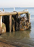 Fredericia strand - panoramio.jpg