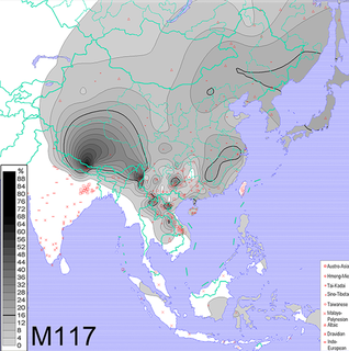 Haplogroup O-M117