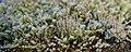Frozen Moss (191087885).jpeg