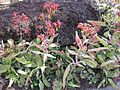 Gardenology-IMG 5349 hunt10mar.jpg