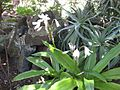 Gardenology.org-IMG 9674 rbgm10dec.jpg