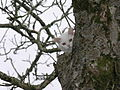 Gato Cat109.jpg