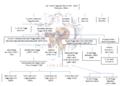 Genealogia Banchieri Poggi2.png