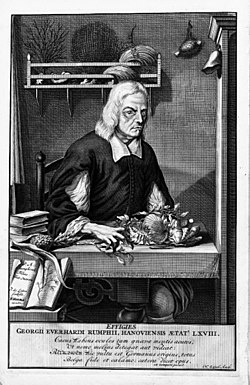 Georg eberhard rumphius wikipedia la enciclopedia libre - Abreviatura de arquitecto ...