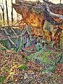 Gesprengter Bunker im Beckinger Wald 16.jpg