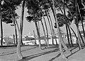 Gezicht op Lissabon vanaf een heuvel met pijnbomen waarschijnlijk Castelo de Sã, Bestanddeelnr 191-0198.jpg