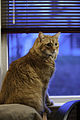 Gillie at the window (5133163865).jpg