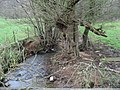 Gnarled trees beside Bathford Brook - geograph.org.uk - 700697.jpg