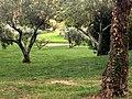 Golf club Albisola 3.jpg