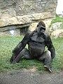 Gorilla Bioparc Valencia.JPG