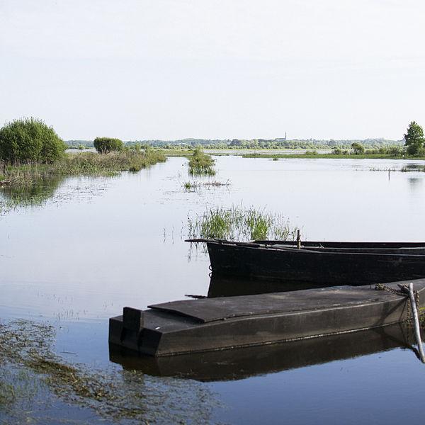 Deux barques au bord du lac de Grand-Lieu.