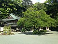 Grand plum tree in front of Hondo of Chinkokuji Temple.JPG