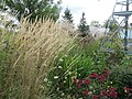 Grasses and autumn flowers (6164502868).jpg