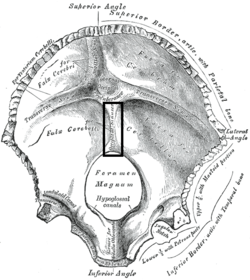 internal occipital crest wikipedia