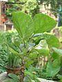 Green nature love.jpg