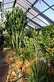 Greenhouse view - Wilhelma Zoo - Stuttgart, Germany - DSC01704.jpg