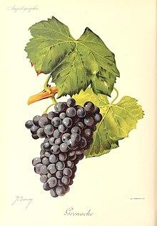 Dry Grape Vines Crafts