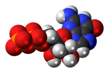 Space-filling model of the guanosine diphosphate anion