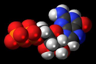 Guanosine diphosphate - Image: Guanosine diphosphate anion 3D spacefill