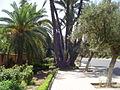 Gueliz Marrakech (2844896299).jpg
